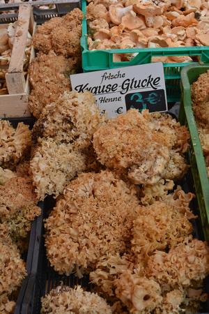 fungi/mushrooms, Nuremburg, Germany Farmers' Market