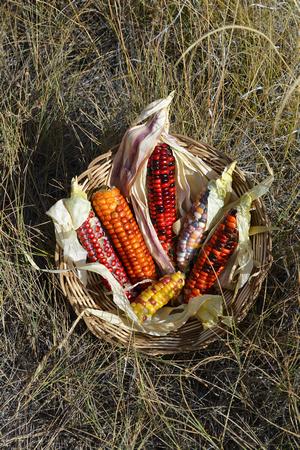 Corn jewels 2