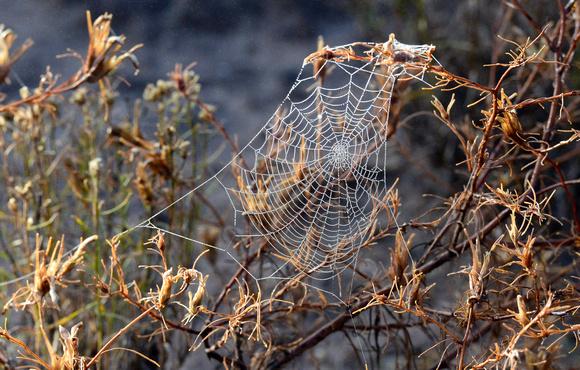 spider webs-2