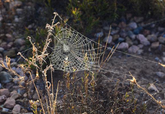 spider webs-4