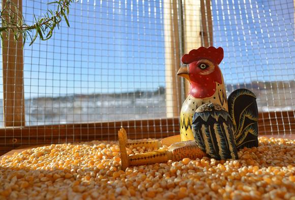 rooster setup 1