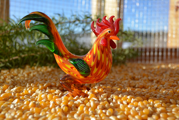 rooster setup 3