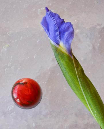 iris and chocolate 2