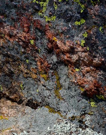 lichen 1