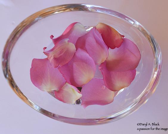 rose petals in water 1