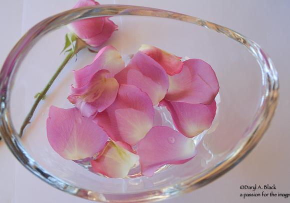 rose petals in water 4