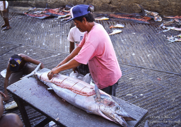 cutting swordfish on dock in Cabo San Lucas