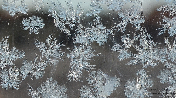 frost fleece