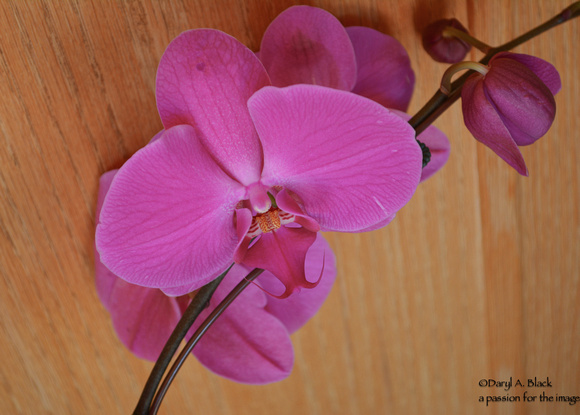 purple orchid against wood