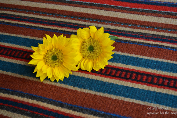 sunflowers and rug 325