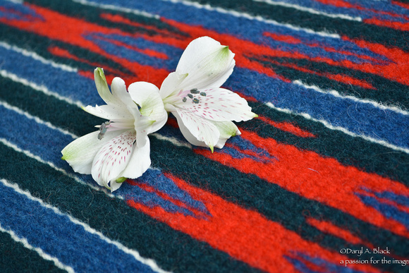 Peruvian lily and rug 315