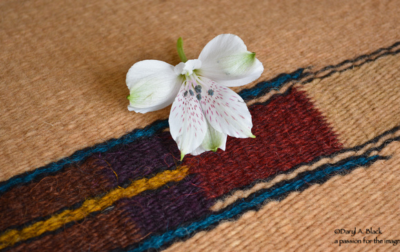 Peruvian lily and rug 318