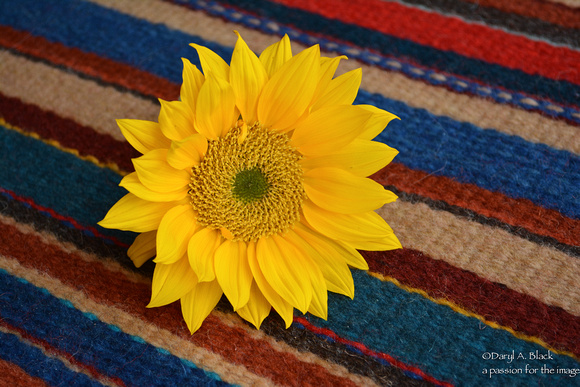 sunflower and rug 325