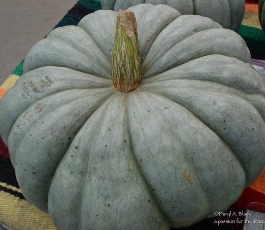 Food - Jarrahdale squash-pumpkin 1