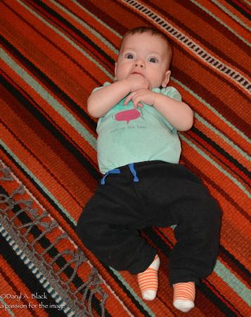 Quinn on Rug # 335