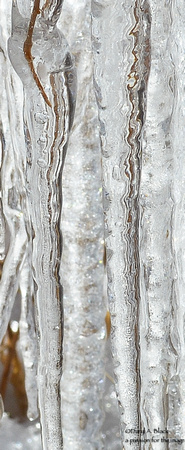 Winter - ice on wisteria 2