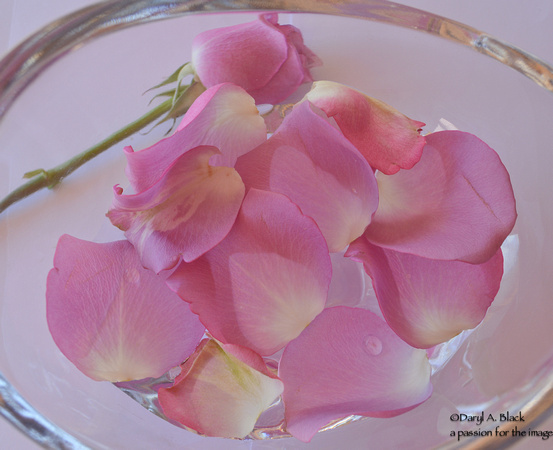 rose petals in bowl-2