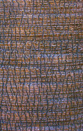 palm bark abstract